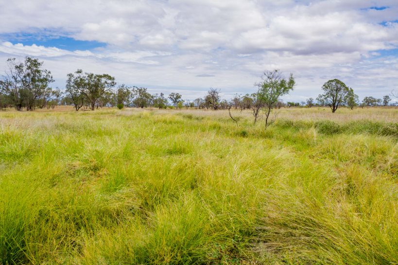 580 Koomalah Road, Dirranbandi, QLD, 4486 - Image 1