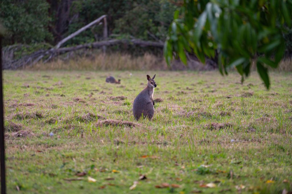 505 Redland Bay Road, Capalaba, QLD, 4157 - Image 15